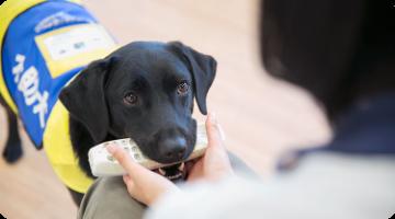 「日本介助犬協会様」での活動